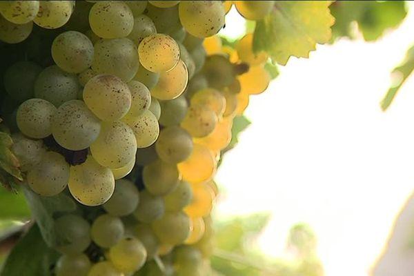 Amandine Boissel, arrière-petite-fille du fondateur du domaine, a converti au bio les 11 hectares de vignes familiales.