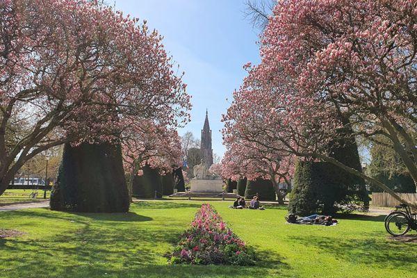 Les magnolias en fleurs de la place de la République, à Strasbourg.