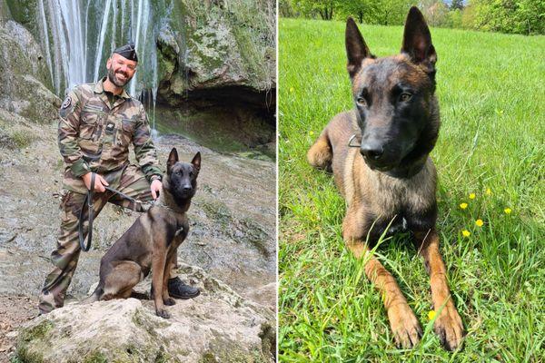Le maître de chien Franck S. et son compagnon à quatre pattes, Pholos, un berger belge malinois d'un an et demi.