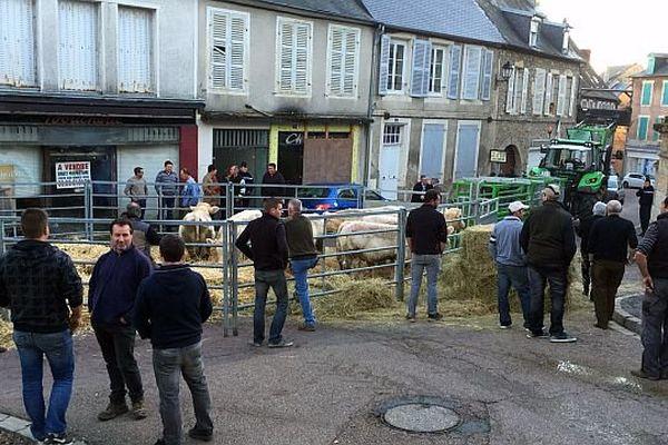 Des broutards devant la sous-préfecture de Château-Chinon.