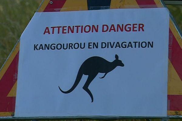 La mairie de Reffannes avait apposé des affichettes pour avertir les automobilistes de la présence d'un kangourou.