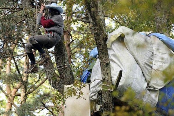 Un militant anti-aéroport dans les arbres