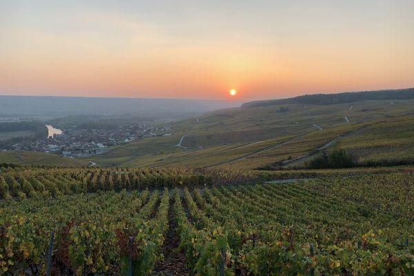 Le vignoble champenois est l'une des caractéristiques du département de la Marne.
