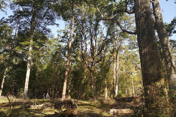 Dans l'Allier, les forêts privées couvrent 100 000 hectares dont 67% de chênes. Les forêts ne sont pas épargnées par le manque d'eau et les fortes chaleurs. Les spécialistes redoutent les conséquences et tentent de trouver des solutions face à des épisodes qui pourraient devenir fréquents.
