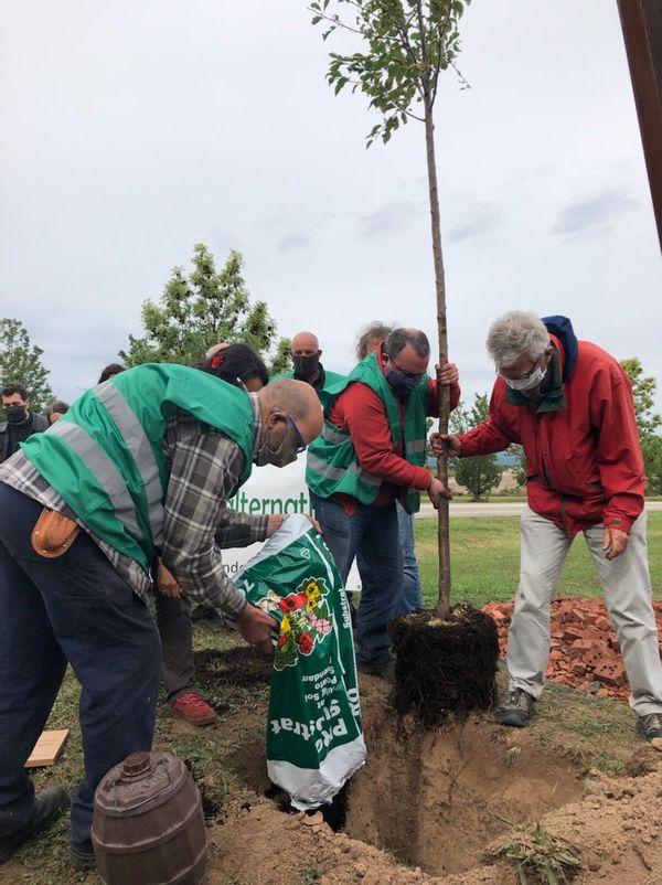 Des arbres ont été plantés dans les deux communes, pour dénoncer les risques environnementaux liés à l'implantation d'Amazon