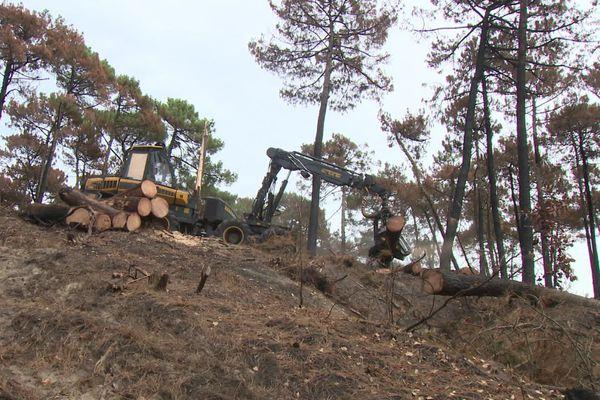 Quelques arbres ont dû aussi être abattus pour sécuriser le site dans sa partie sinistrée.