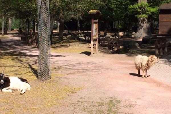 Les animaux du parc Friedel, où se trouve l'installation solaire