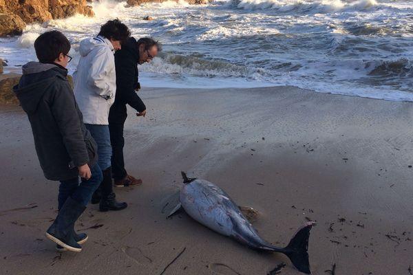 Un dauphin s'est échoué au Croisic lors du passage de la tempête Carmen