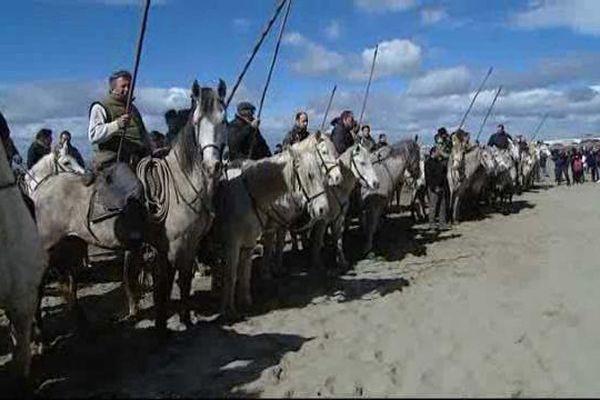 200 chevaux et 44 taureaux ont participé à l'abrivado des plages 2016