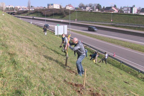 L'opération citoyenne de plantation d'arbres s'effectue sur un délaissé routier sur la commune de Saint-Apollinaire