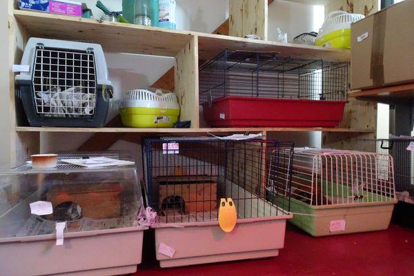 Salle de convalescence au refuge de Rosenwiller, les hérissons se reposent dans des cages pour lapins.