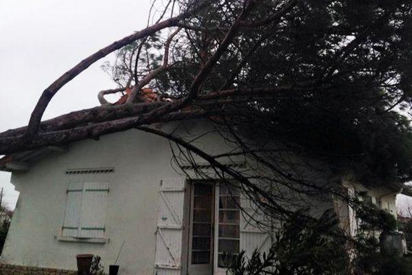 Après les fortes rafales de vent, un arbre est tombé sur une maison de Gujan Mestras (33) le 29/01/15