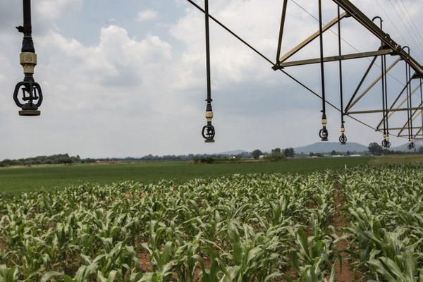 Pour ne plus utiliser de pesticides, les municipalités optent souvent dans l'investissement de machines.