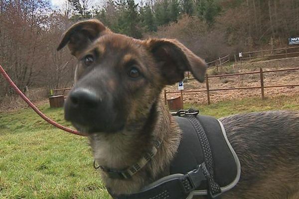 l'association canine du haut-Forez a sauvé une cinquantaine de chiens depuis sa création.