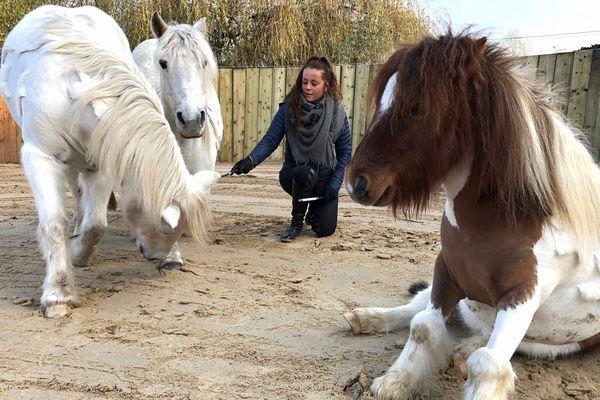 Elisa Laville, installée au Marais Vernier (76) animera la carrière assurera des animation tous les jours au salon du cheval.