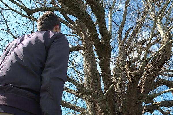 L'un des étudiants devant l'un des 70 arbres remarquables recensé dans la communauté de communes Nièvre et Somme