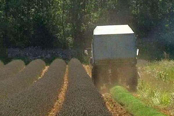 Saint-Privat-de-Champclos (Gard) - la récolte du lavandin en Cévennes - août 2013.