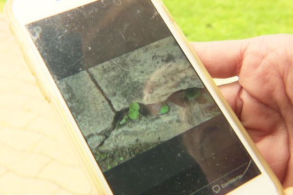 Une fois caché, les photo-indice du galet caché se retrouvent sur une page facebook, version moderne de la carte au trésor