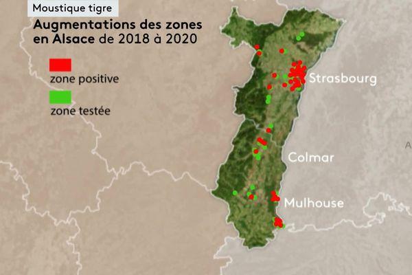 C'est en posant des pièges pondoirs que l'on se rend compte de la prolifération du moustique tigre en Alsace