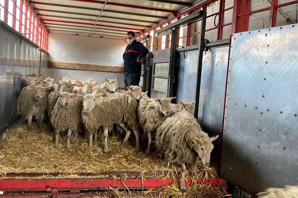 Les animaux survivants ont été transférés dans une autre ferme corrézienne.