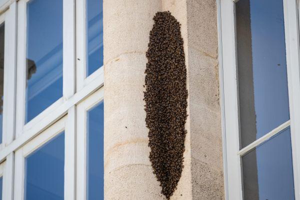Un essaim impressionnant de dizaines de milliers d'abeilles place des Grands Hommes à Bordeaux (mai 2020)