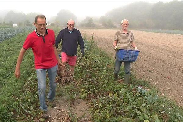 Des bénévoles cultivent depuis 2 ans une parcelle de 5.000 m2 à Herbignac au profit des Restos du coeur.