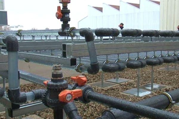 Utiliser les eaux usées  pour se chauffer, c'est possible ! les photobioréacteurs sont installés sur le toit de l'immeuble, c'est dans les tubes en plastique que circule le futur carburant vert.