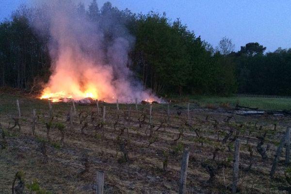 Brûlages dans les rangs de vigne pour empêcher le gel