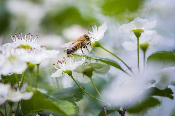Le texte de loi pour la réintroduction des néonicotinoïdes passera devant le Sénat le 27 octobre, des apiculteurs de Haute-Loire se mobilisent contre ce texte.