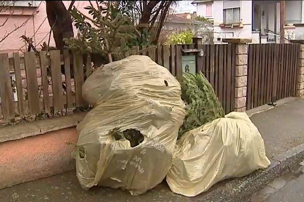 Les sapins ramassés dans les rues seront transformés en compost