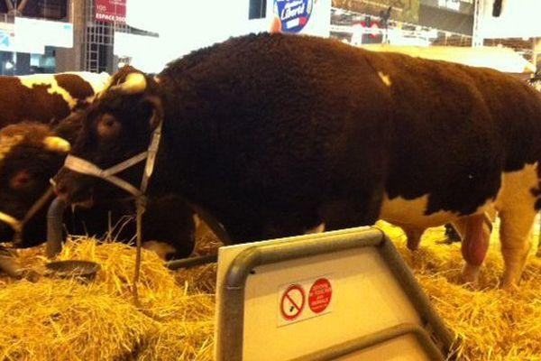 Fêtard, le taureau, pesait près de deux tonnes.