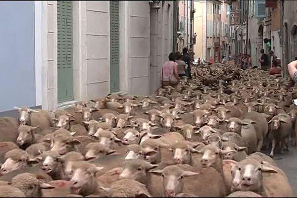 Die - Fête de la transhumance 2017. La ville traversée par près de 2000 ovins