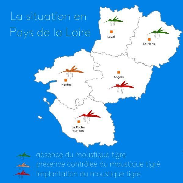 La surveillance estivale du moustique tigre a débute en Pays de la Loire (données ARS pdl)