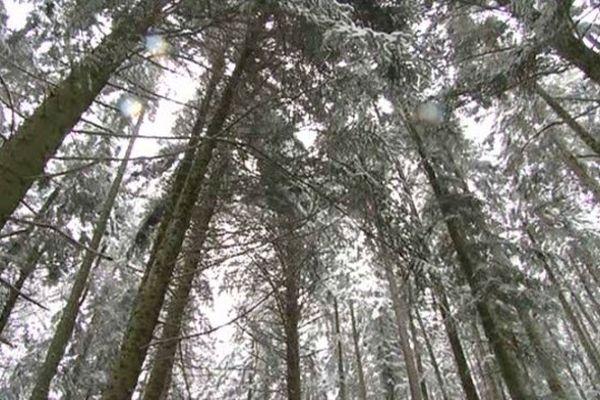 la Forêt couvre près de la moitié du territoire lozérien