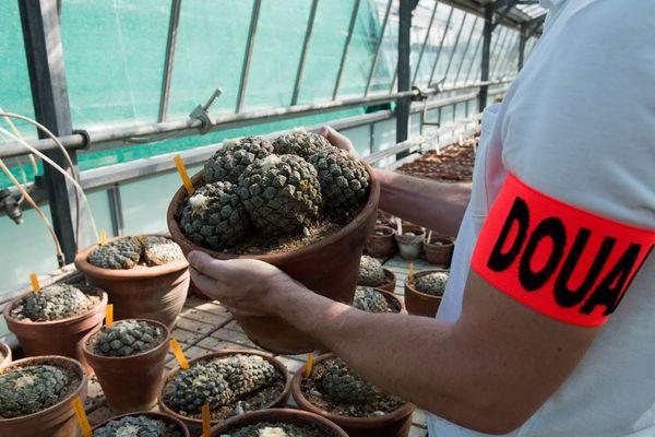 369 cactus menacés et protégés saisis par la douane française.