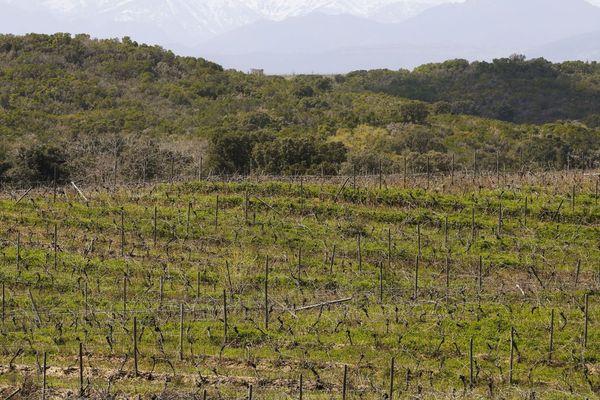 Le domaine de Casabianca (469 hectares, dont 228 de vignes) sur la Plaine orientale de la Corse.