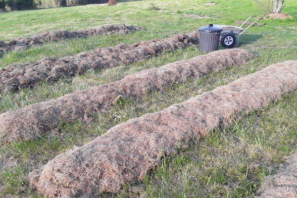 Vous ne savez pas quoi faire de vos déchets de tonte ? C'est le moment de vous lancer dans la culture de la patate sur gazon, facile, économique, écologique...