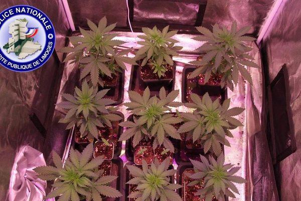 À Pierre-Buffière, le cultivateur de cannabis était très bien équipé.