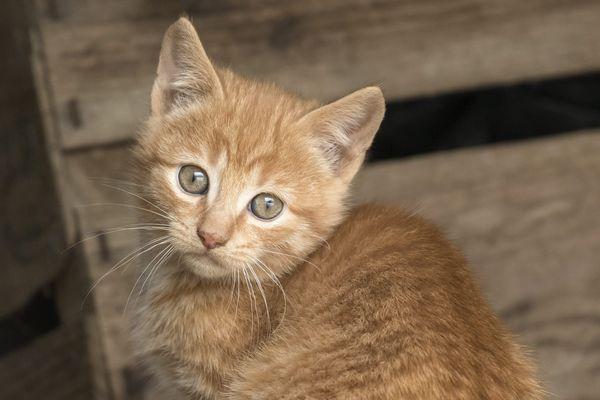 La SPA de Lyon accueille près de 10 000 animaux chaque année.