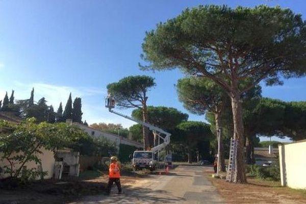 La mairie de La Grande-Motte a décidé d'abattre des dizaines de pins parasols sains âgés d'une quarantaine d'année. Un programme d'aménagement urbain source de polémique - 29 octobre 2019.