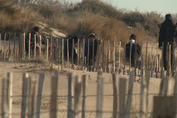 Agde (Hérault) - ce chantier d'insertion permet de sauvegarder la plage - janvier 2021.
