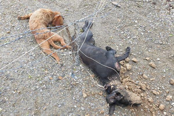 Deux chiens atrocement mutilés et martyrisés ont été découvert par la police municipale à l'est de Nantes