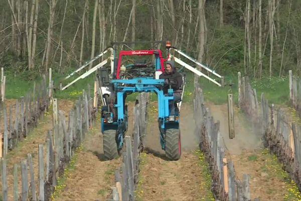 Avant l'arrivée du gel, ces viticulteurs de Saône-et-Loire préparent leur vigne avec des infusions de plantes.
