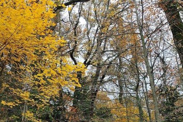 Hêtres dans la forêt de la Sainte-Baume.