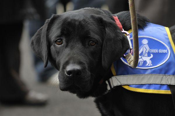 Les magasins qui, par mesure d'hygiène, sont interdits aux animaux sont dans l'obligation d'autoriser l'accès des chiens d'assistance accompagnant leurs clients titulaires d'une carte d'invalidité. Photo d'illustration.