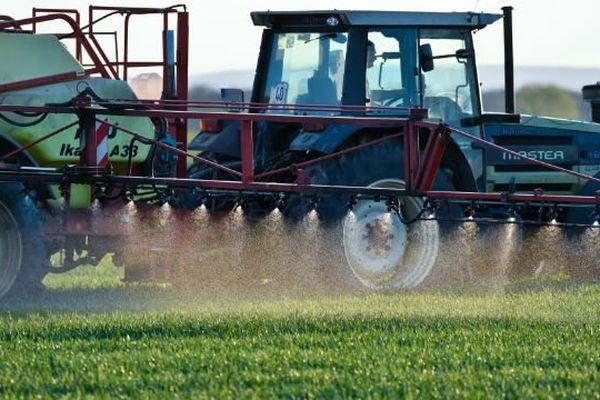Quatre cultures (céréales à paille, maïs, colza et  vigne) utilisent près de 80 % des quantités de pesticides.