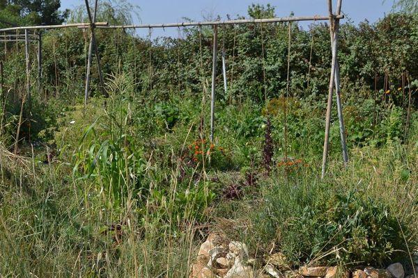 Les produits locaux ont connu un grand succès pendant le confinement, notamment dans les associations pour le maintien de l'agriculture paysanne (AMAP), comme ici à Saint Mathieu de Tréviers, dans l'Hérault.