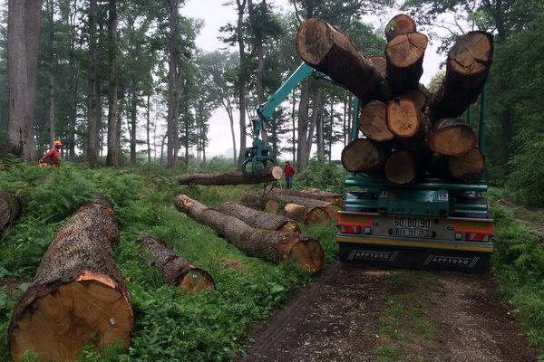 Le bois de chêne est privilégié pour fabriquer les fûts où vieilliront vins, Cognac ou eaux-de-vie