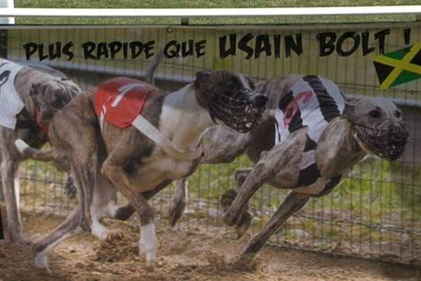 Pour le 15 août, on a lâché les chiens sur l'hippodrome d'Aix-les-Bains.