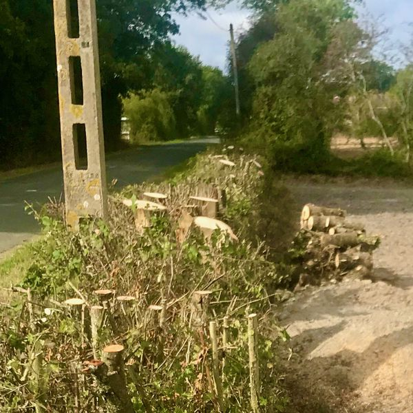 Une haie coupée pour le déroulage de la fibre optique en Loire-Atlantique